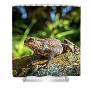 Amphibian, Common British Toad / Frog Shower Curtain