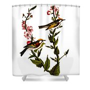 Audubon: Warbler Shower Curtain