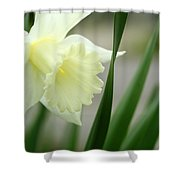 Bloosome Shower Curtain