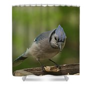 Bluejay Shower Curtain