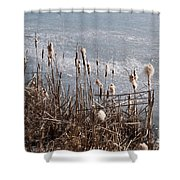Bulrush Shower Curtain
