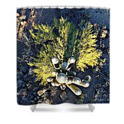 Cactus Saguaro Shower Curtain