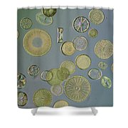 Close View Of Diatoms Shower Curtain