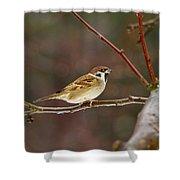 Eurasian Tree Sparrow Shower Curtain