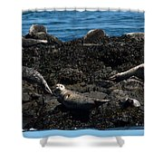 Clear Day Barn Shower Curtain
