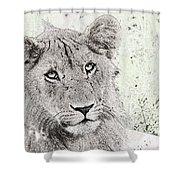 lioness Masai Mara, Kenya Shower Curtain