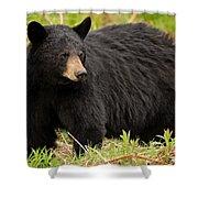 Maine Black Bear Shower Curtain
