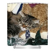 Maine Coon Shower Curtain