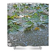 6 Mile Swamp Shower Curtain