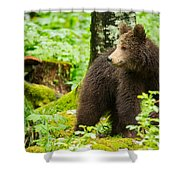 One Year Old Brown Bear In Slovenia Shower Curtain