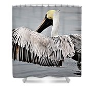 Pelican Take Off Shower Curtain