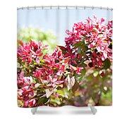 Pink Cherry Flowers Shower Curtain