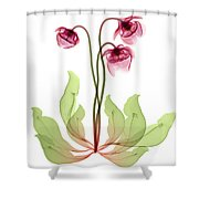 Pitcher Plant Flowers, X-ray Shower Curtain