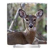 White Tailed Deer Smithtown New York Shower Curtain