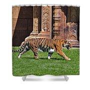 61- Sumatran Tiger Shower Curtain