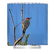 62- Red-bellied Woodpecker  Shower Curtain