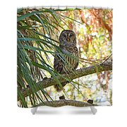 6204 Shower Curtain