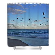 65- Black Skimmers Shower Curtain