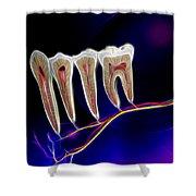 Anatomy Art Shower Curtain