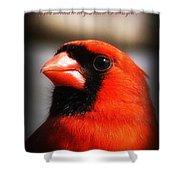 6751-010 Cardinal - Miss You Shower Curtain
