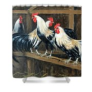 #69 - Roosters Shower Curtain