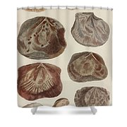 Aquatic Animals - Seafood - Shells - Mussels Shower Curtain