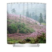 Blossoming Peach Flowers In Spring Shower Curtain