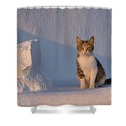 Cat On A Greek Island Shower Curtain