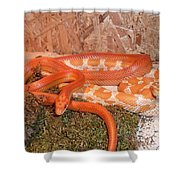 Corn Snake Shower Curtain