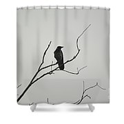 Crow Shower Curtain