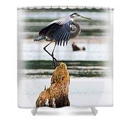 Great Blue Heron Shower Curtain