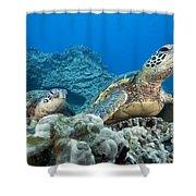 Hawaii, Green Sea Turtle Shower Curtain