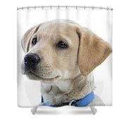 Labrador Puppy Shower Curtain