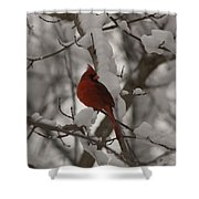 Male Cardinal Shower Curtain