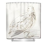 Mourning Dove, Animal Portrait Shower Curtain