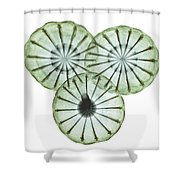 Opium Poppy Pods, X-ray Shower Curtain