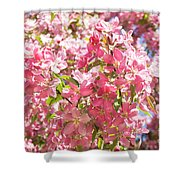 Pink Cherry Flowers Shower Curtain