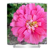 Pink Zinnia Shower Curtain