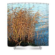 Reed Shower Curtain