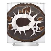 Septarian Nodule Shower Curtain
