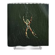 Spider On A Web Shower Curtain
