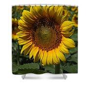 Sunflower Series Shower Curtain