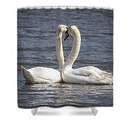 Swan -- Shower Curtain