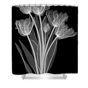 Tulips, X-ray Shower Curtain