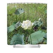 White Lotus Flower Flower Lotus Nature Summer Green Plant Blossom Asian Shower Curtain