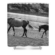 Wild Mustangs Shower Curtain