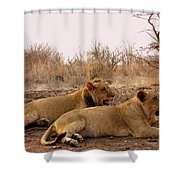 Zimbabwe Shower Curtain