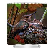 7389 All Feathered Out Shower Curtain