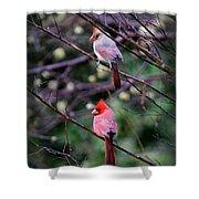 7440-008 Cardinal Shower Curtain