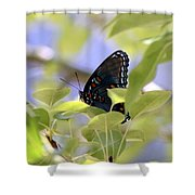 7759 - Butterfly Shower Curtain